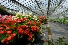 Blumenanbau