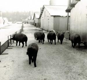 SZME - Mastanlage - Freigänger im Winter-1969/70